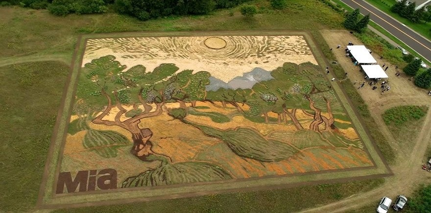 Guy Spends 6 Months Recreating A Van Gogh Painting Using Plants In A 1.2-Acre Field