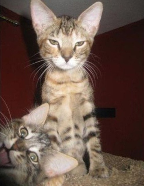 animal-photobombs-27