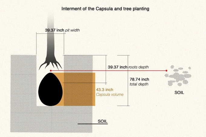 bye bye coffins these organic burial pods will turn you into a tree