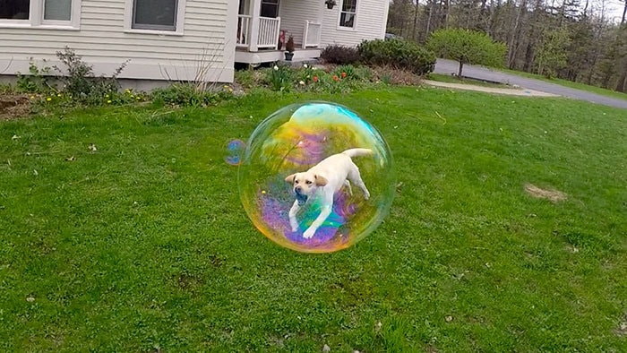 Of The Most Perfectly Timed Photos Youll Ever See - 33 of the most perfectly timed photos ever taken